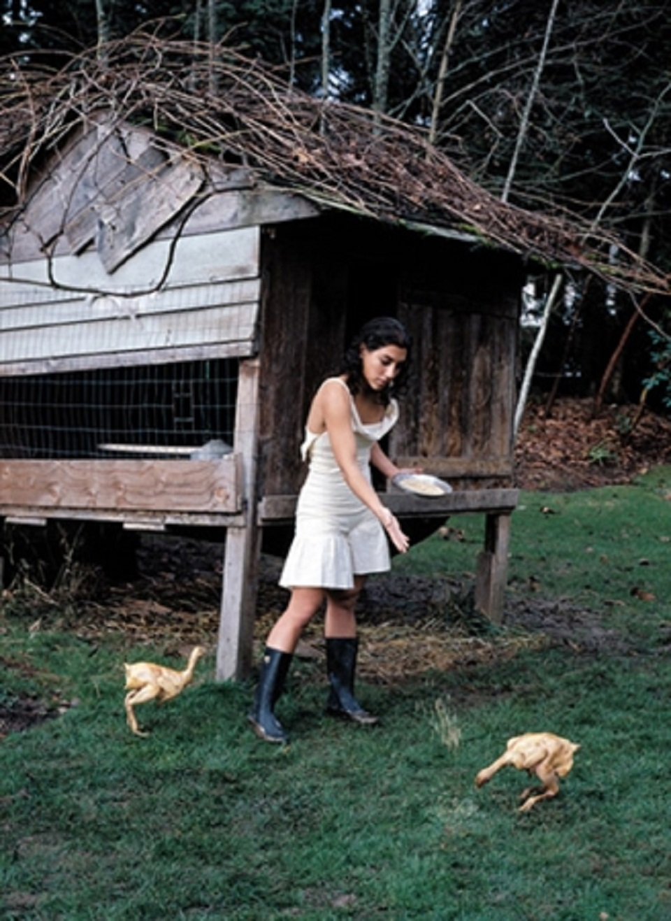 Margot Quan Knight – Chicken Feed (The Garden)