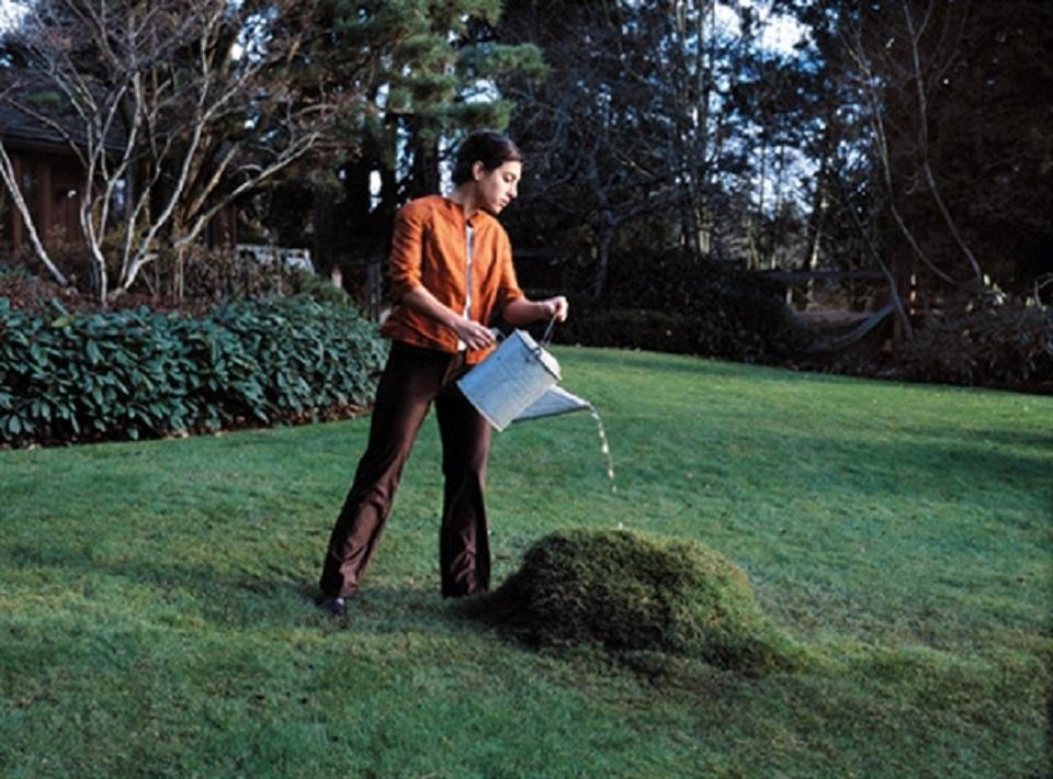 Margot Quan Knight – Hump (The Garden)