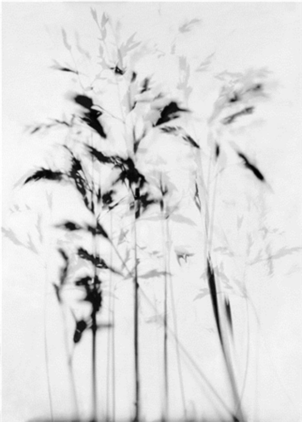 Stefania Ricci – Alberi fili d'erba 1