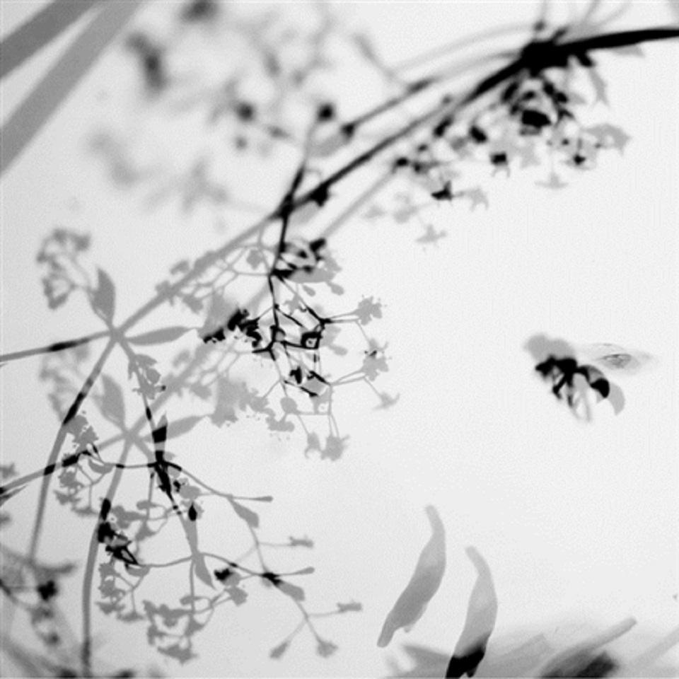 Stefania Ricci – Insiemi Naturali 122